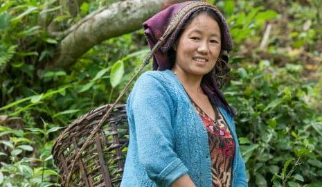 Bild Frau bei der Ernte