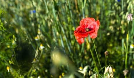 Bild Wildblumen